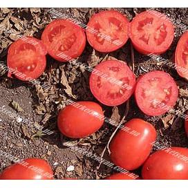 ЮГ 124 F1 семена томата детермин. среднего 10 000 семян United Genetics