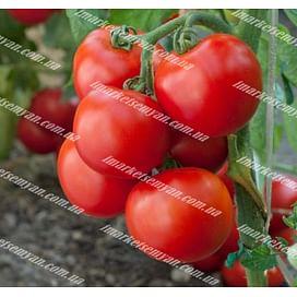 Тайпринц F1 семена томата детермин. среднего 20 семян United Genetics