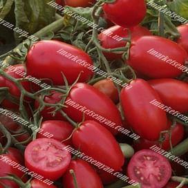 Брисколино F1 семена томата детермин среднего United Genetics
