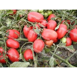 Сурия F1 семена томата детермин. раннего 1 000 семян Vilmorin/Вилморин