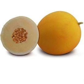 КС 7066 F1 семена дыни тип Honey Dew Kitano/Китано