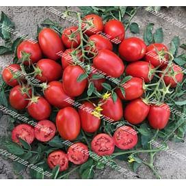 9905 F1 семена томата детерминант. среднеспелого красного Lark Seeds/Ларк Сидс