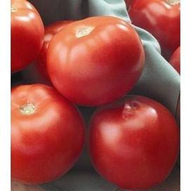 Флорида F1 (Florida F1) семена томата детерминантного 1 000 семян Seminis/Семинис