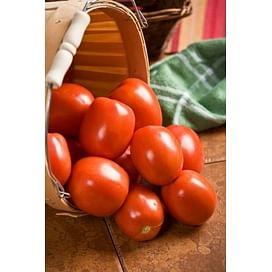 Яки F1 (Yaqui F1) семена томата детерминантного среднего Seminis/Семинис
