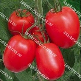 1015 F1 семена томата детерминаного Lark Seeds/Ларк Сидс