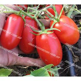 ТАЛЕНТ F1 семена томата детерминантного 1 000 семян Esasem/Эзасем