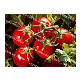 ПОДИУМ F1 семена томата детерминантного 1 000 семян Esasem/Эзасем