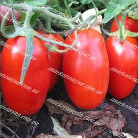 КАЛЬВЕРТ F1 семена томата детерминантного 1 000 семян Esasem/Эзасем