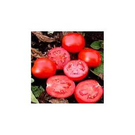 ВОЛЛИ РЕД F1 семена томата детерминантного 1 000 семян Esasem/Эзасем