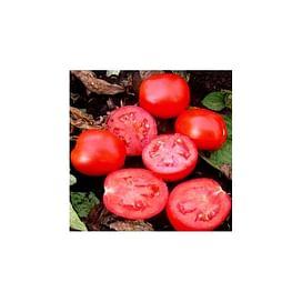 ВОЛЛИ РЕД F1 семена томата детерминантного 25 000 семян Esasem/Эзасем