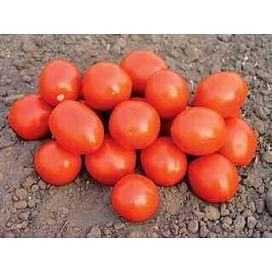 Ред Скай F1 семена томата дететерминантного среднераннего Nunhems