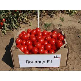 Дональд F1 семена томата детерминантного 1 000 семян Nunhems