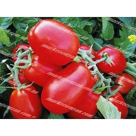 1510 F1 новинка семена томата детерминантного Lark Seeds/Ларк Сидс
