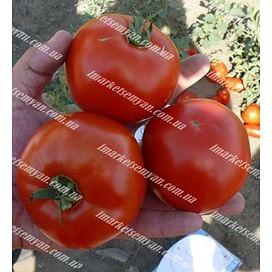 1502 F1 семена томата детерминантного Lark Seeds/Ларк Сидс