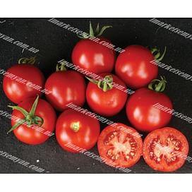 Шаста F1 семена томата детерминантный Lark Seeds/Ларк Сидс