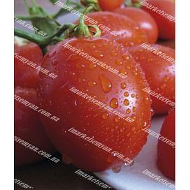 Санни F1 семена томата дет. 5 000 семян Lark Seeds/Ларк Сидс