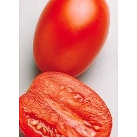 ГЕЛЕКСИ F1 (Галакси F1) семена томата детерминантного 1 000 семян Esasem/Эзасем