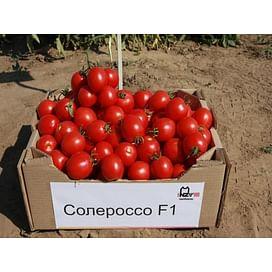 Солероссо F1 семена томата детерминантного раннего Nunhems