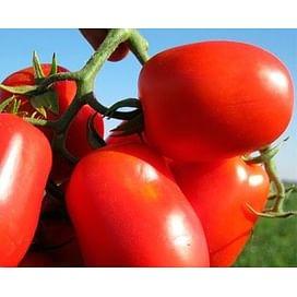 3402 F1 семена томата детерминантный сливка Heinz/Хайнц