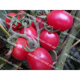 Розовый новичок семена томата детермин. среднего (сливка) Semenaoptom/Семенаоптом