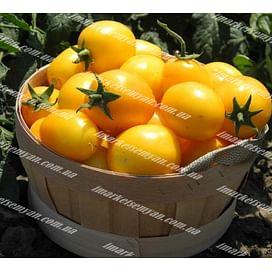 Елоу Ривер F1 семена томата дет. раннего желтого United Genetics