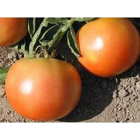 Лонг Кипер семена томата дет. позднего розово-оранжевого Semenaoptom/Семенаоптом
