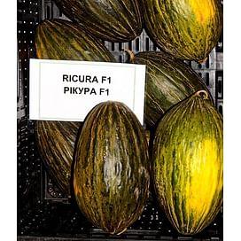 Рикура F1 семена дыни Rijk Zwaan/Рийк Цваан