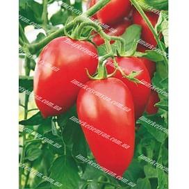 Адель F1 семена томата индет. раннего 8 семян United Genetics