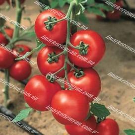 Джадело F1 семена томата индет. раннего 500 семян Vilmorin/Вилморин