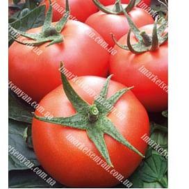 Зодиак F1 семена томата индет. среднего NongWoo Bio