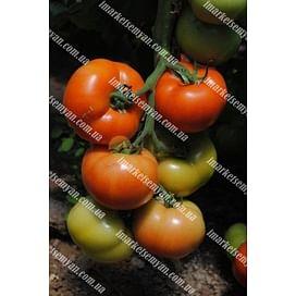 Рок F1 семена томата индетерм. среднераннего 500 семян DRS-Seminis