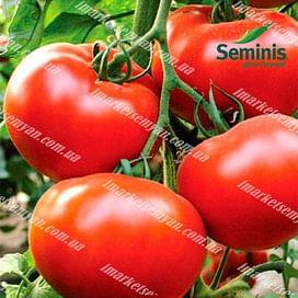 Хиларио F1 семена томата индетермин. раннего 250 семян DRS-Seminis