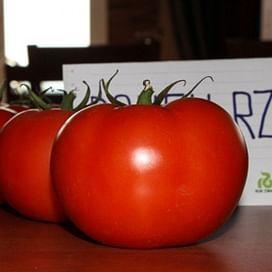 Дофу F1 семена томата индетерминантного среднего Rijk Zwaan/Рийк Цваан