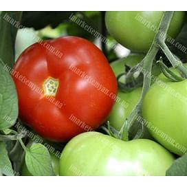 Соренто F1 семена томата индетерминантного LibraSeeds