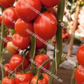 Томоко F1 семена томата индетерминат. раннего 1 000 семян Bejo/Бейо