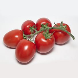 KS 3819 F1 семена томата индетерм. раннего красного Kitano/Китано