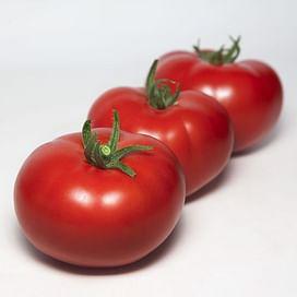 KS 301 F1 семена томата индетерм. раннего красного Kitano/Китано