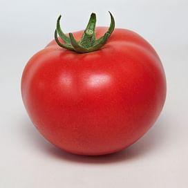 KS 21 F1 семена томата индетерм. раннего красного Kitano/Китано
