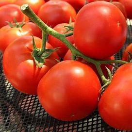 Фантастина F1 семена томата индетермин. среднераннего 500 семян Syngenta/Сингента
