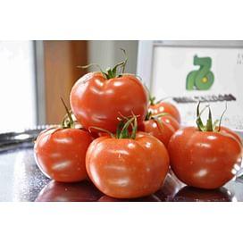 Берил F1 семена томата индетер. среднеспелого красного Rijk Zwaan/Рийк Цваан