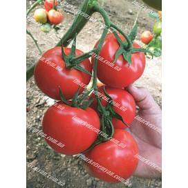 Немесис F1 семена томата индетерминантного Yuksel/Юксел