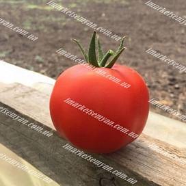 Анталия F1 семена томата индетерминантного Yuksel/Юксел