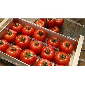 Клад F1 новинка семена томата индет. красного Lark Seeds/Ларк Сидс