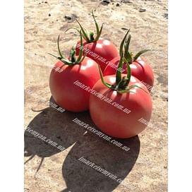 Пинк Нагетс F1 семена томата индет. 500 семян Yuksel/Юксел