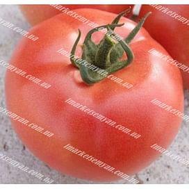 ВП 2 F1 (VP 2 F1) семена томата индет. раннего Vilmorin/Вилморин