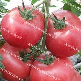 Пинк Харт F1 семена томата индет. среднего NongWoo Bio