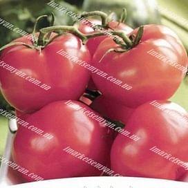 Пинк Топ F1 семена томата индет. среднего 8 семян NongWoo Bio