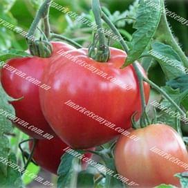 Розовое наслаждение семена томата индетермин. среднего Semenaoptom/Семенаоптом