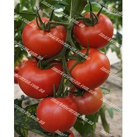 Канна 218 F1 семена томата индетерм. розового раннего 500 семян DRS-Seminis