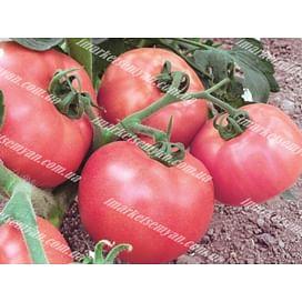 Пинк Уникум F1 семена томата индетермин. раннего 250 семян DRS-Seminis